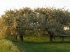 4.1fruitbomen